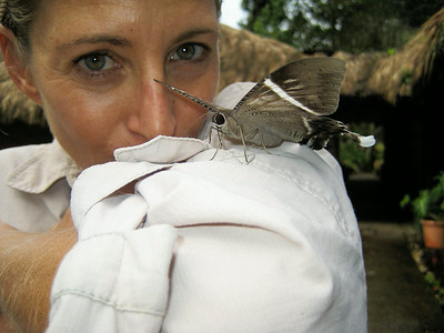 The Atlas Moth
