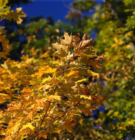 New Hampshire Fall Oct 2009