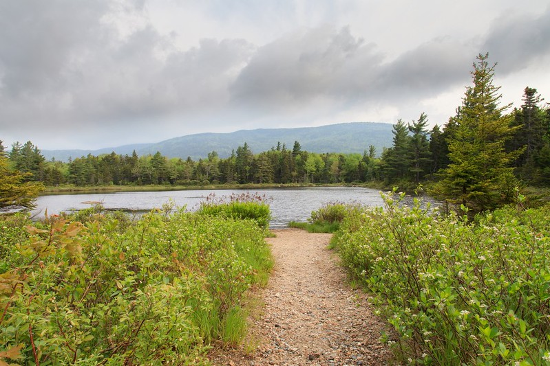 Lily Pond - White Mtns - NH