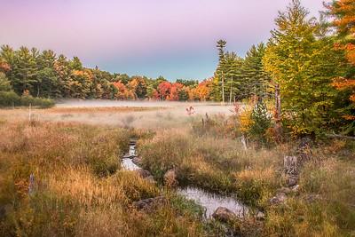 Old Beaver Pond