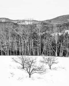 Winter Apples / Etna, New Hampshire