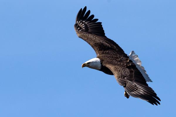 New Haven Eagles