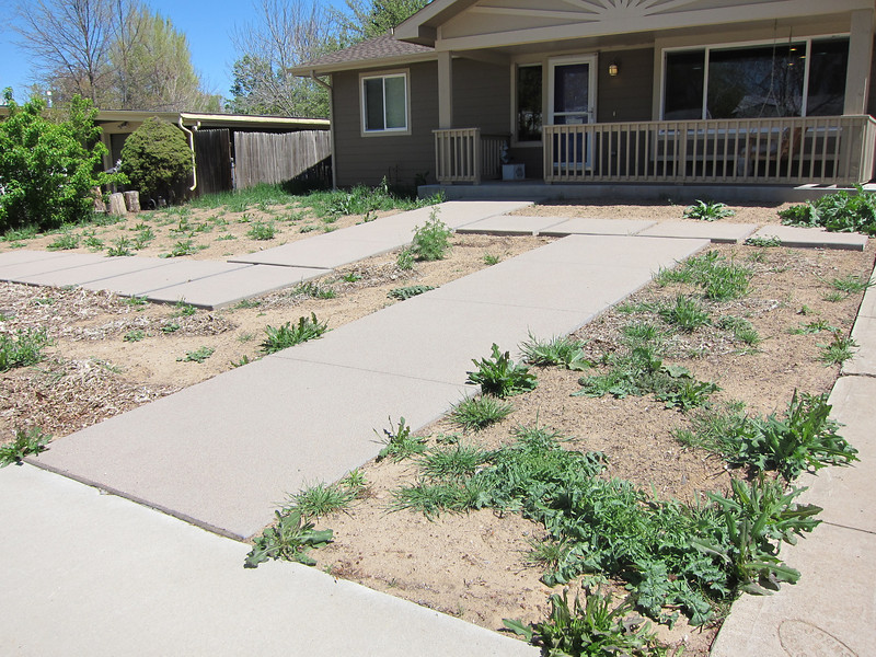 Phase 3 of the landscaping will be all about the front yard.  The 3 areas nearest in this photo will remain front yard veggie gardens (that embarrass my daughter to no end) and the area in the upper left will have a maple tree and some decorative grasses.    Right now it's just weeds and leftovers from last year's garden.