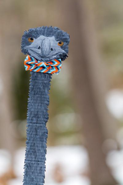 Emu_Eduardo
