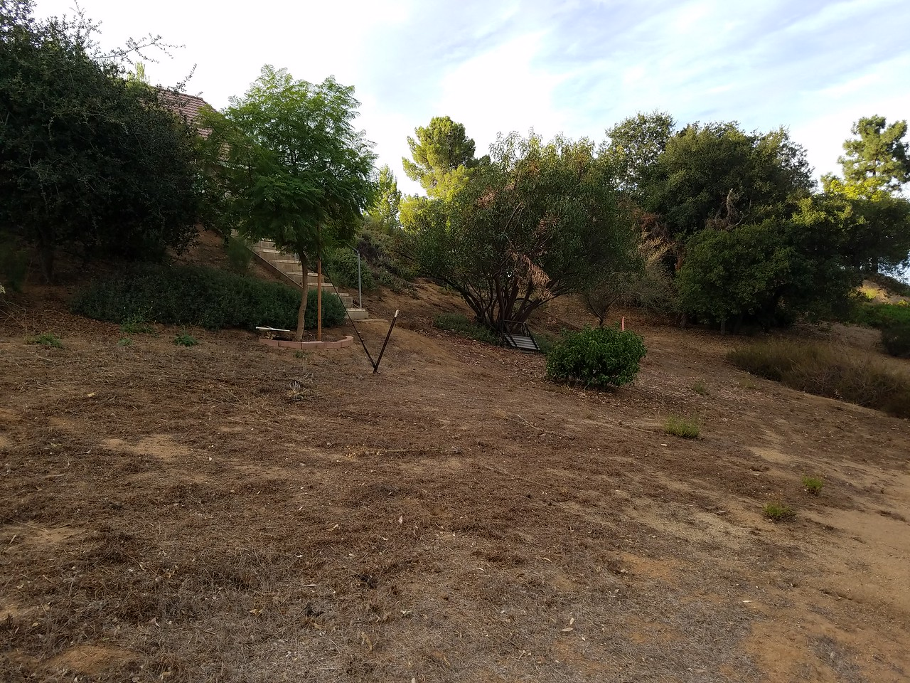 Back yard. It does have a  Jacaranda tree!