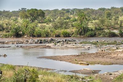 Mara River with croc 4188