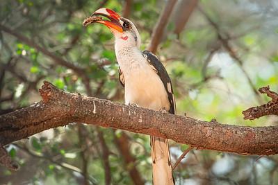Hornbill 4882