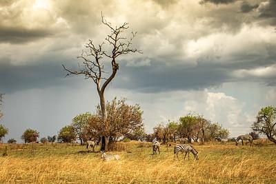 Mara Landscape with zebra 0856