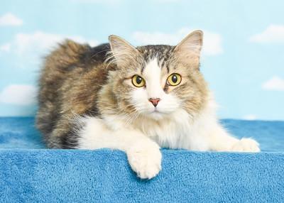 Miss Kitty A41828316 2002