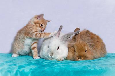 Kitten and Bunnies Carson 1237 ps