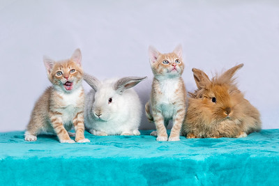 Kittens and Bunnies 1187