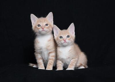 Kittens 1065 (1 of 1)