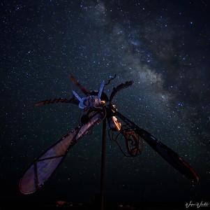 Terlingua's Creature of the Night