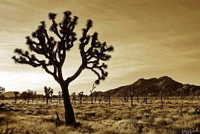 Joshua Tree National Park (2005)