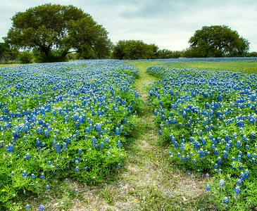 Bluebonnnet Trail