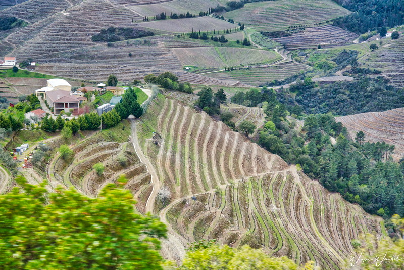 Douro River Vineyards (sorry, its a snapshot from a moving bus but they were not going to stop so I could take a photograph)