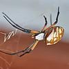 Giant Black & Yellow Garden Spider