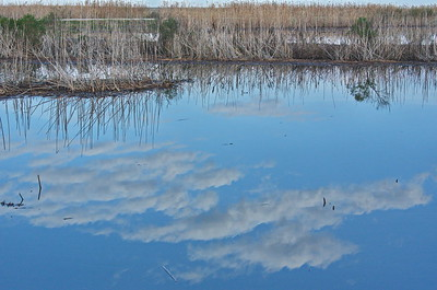 Shoveler Pond Reflections; Clouds & Reeds