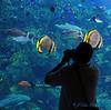 Aquarium of the Pacific #1