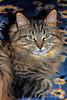 My Kitty Gemma
