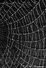 Spider Web in Black and White #2