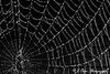 Spider Web in Black and White