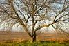 Binford Tree - 01