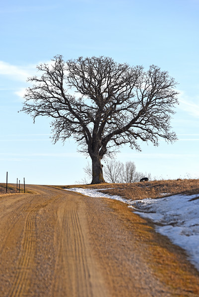 country road tree - 01