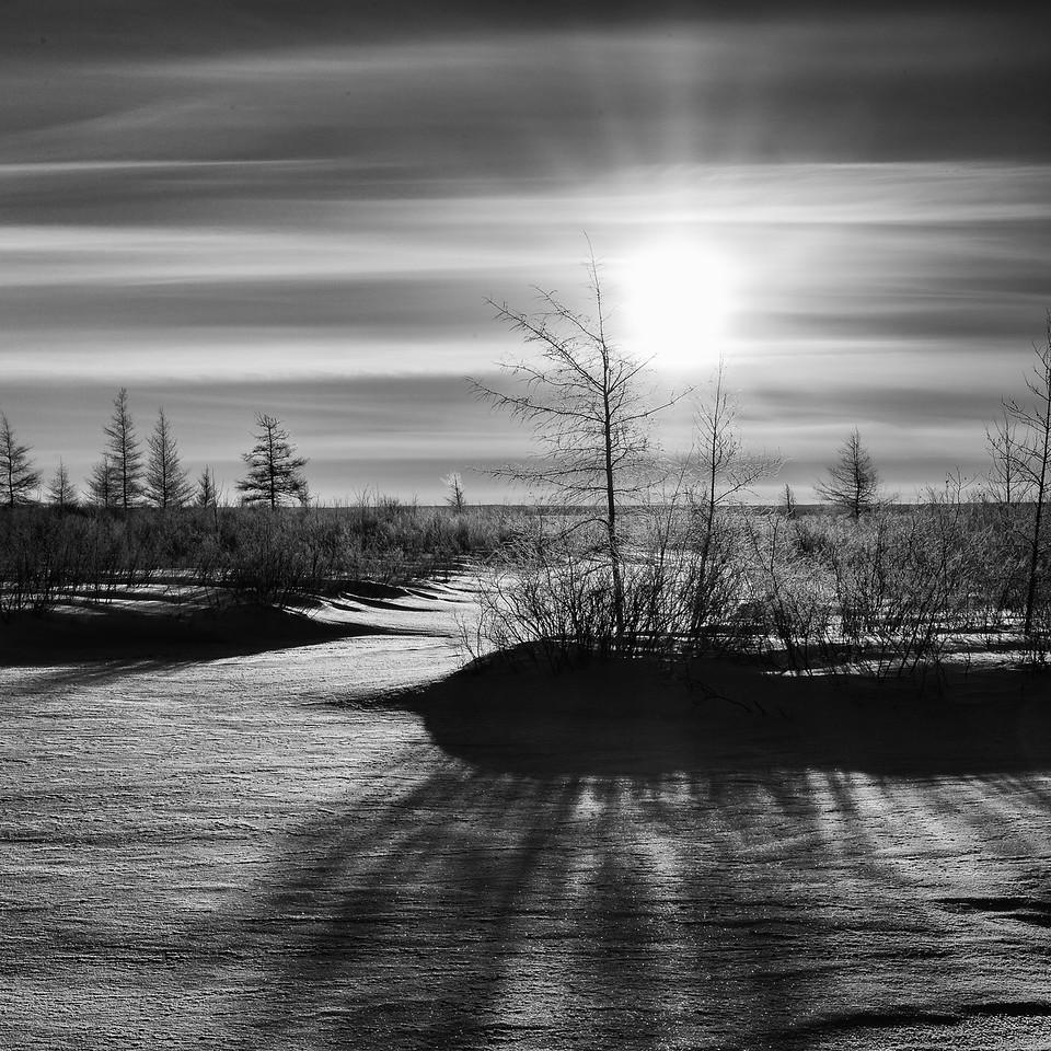 Lone Pine Road Morning