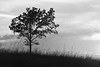 Sunset tree bw - 01
