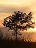 Sunset tree - 02