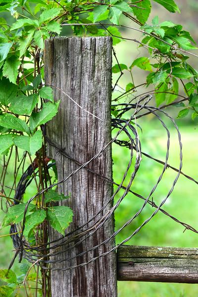 Maple Ridge fence