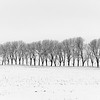 Tree row in the snow - 04 - best
