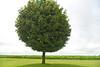 Lone tree in Iowa - 05