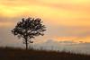 Sunset tree - 01