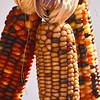 Indian corn - 01