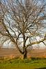 Binford Tree - 02