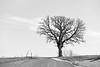 SE MN Tree bw