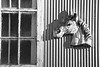 Horse window - 01 bw