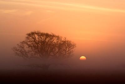 Sunrise on a Foggy Morning