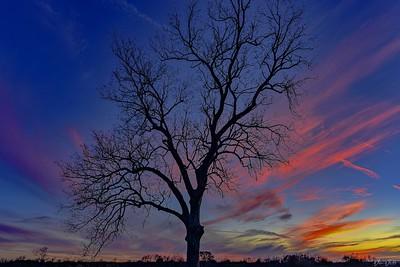 Forky Tree