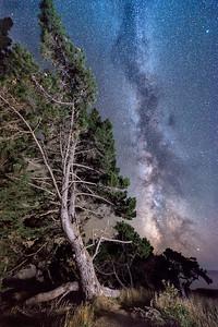 Sea Pine & Milky Way, Sea Ranch, California