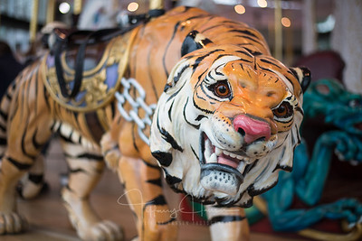 Looff Carrousel Tiger