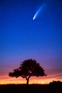 Orchard Tree & Comet NEOWISE, Sonoma County