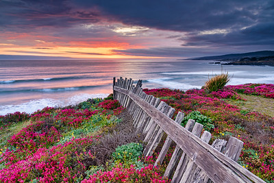 Black Point Flowers & Fence, Sea Ranch, California