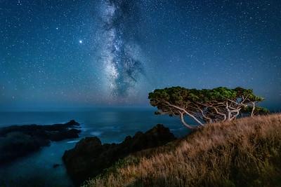 Twisted Cypress & Milky Way, Sea Ranch, California