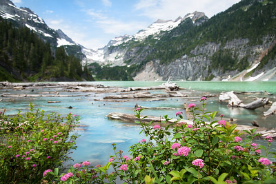 Blanca Lake Spirea