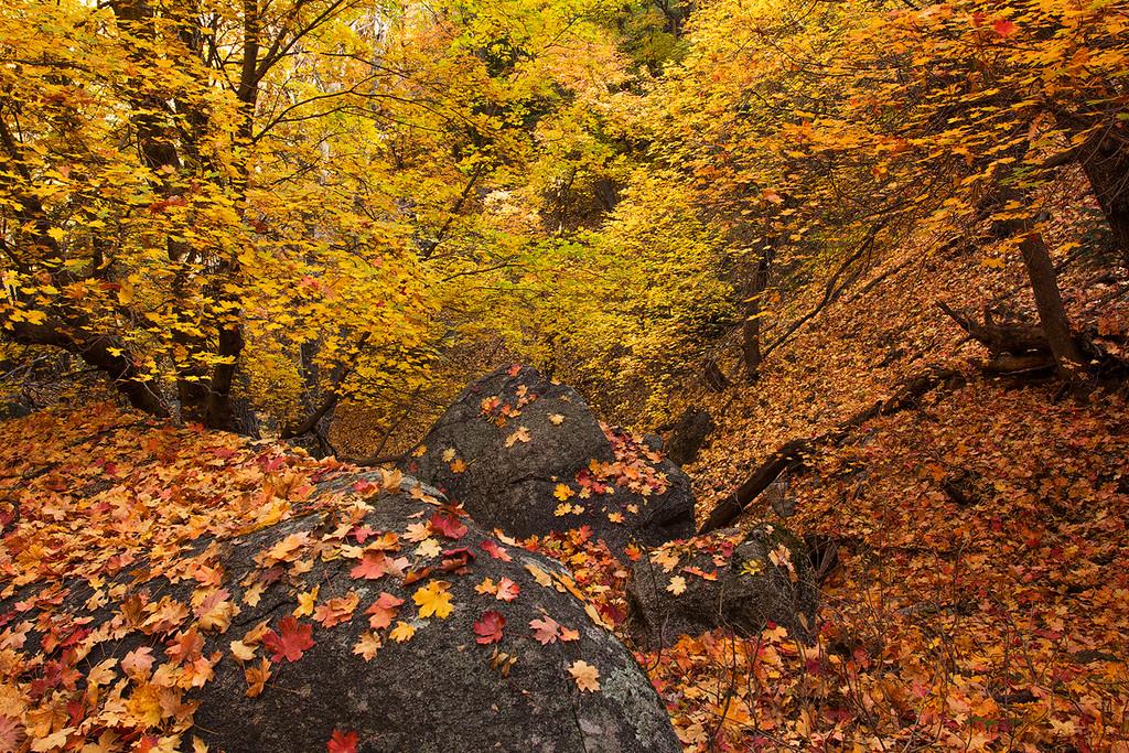 Six Shooter Trail Autumn 7