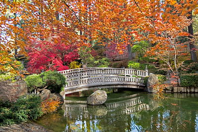 Japanese Garden in Full Autumn