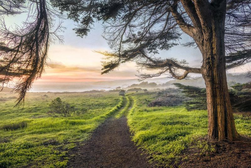Trail to the Beach, Sea Ranch, California